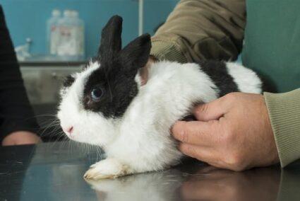 rabbit sneezing white discharge