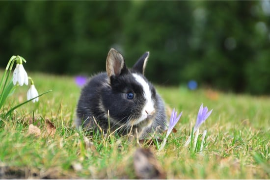 releasing domestic rabbits into wild