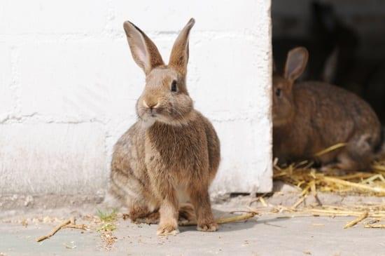 sudden hair loss in rabbits