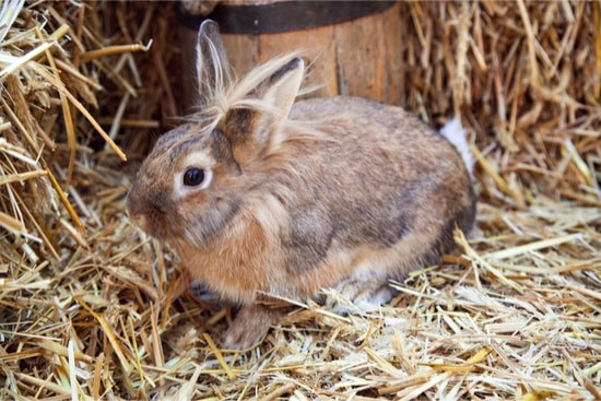 what makes a good rabbit bedding?
