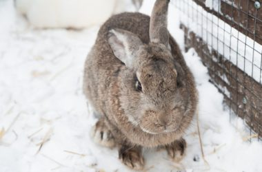 what temperature is too cold for rabbits?