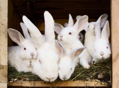how do rabbits communicate with their babies?