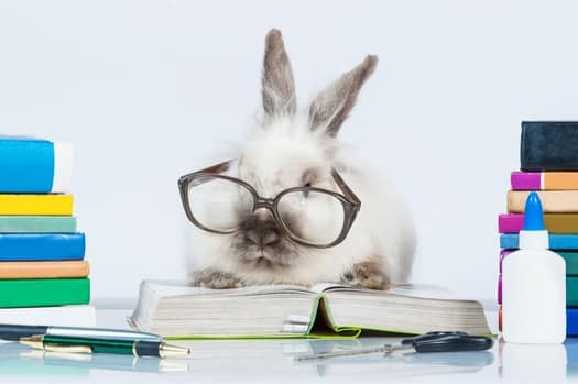 how smart are rabbits?