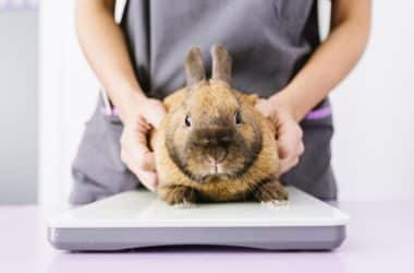 is it a rabbit false pregnancy or real?