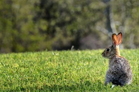 rabbit thumps for no reason