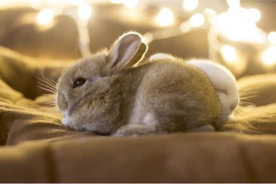 weepy eye in rabbits