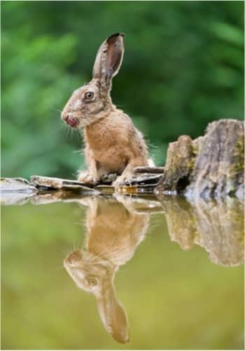 Do Pet Rabbits Like to Swim?