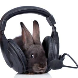 Do Rabbits Like Listening to Music?