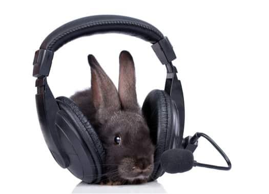 Do Rabbits Like Listening to Music?