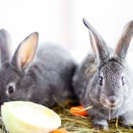 What foods are toxic to rabbits?