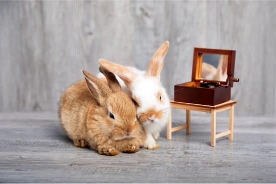 do rabbits enjoy music?