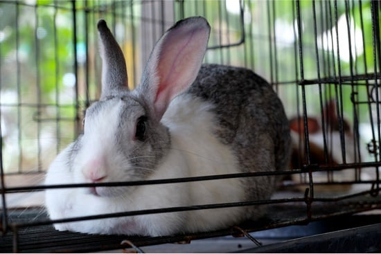 do rabbits get bored in their cage?
