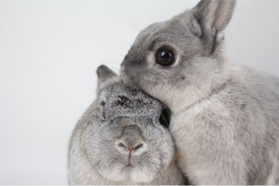 do rabbits remember their siblings?