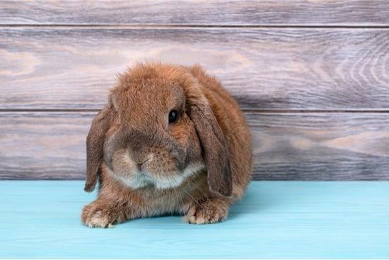 do rabbits sweat?