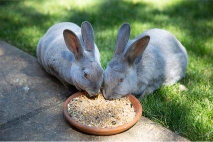 foods rabbits should avoid