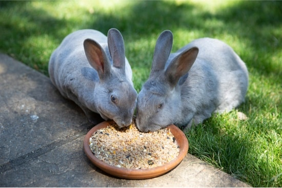 foods rabbits should avoid