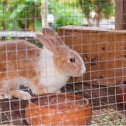 how do you disinfect a rabbit cage?