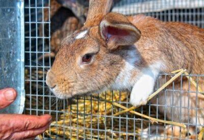 outdoor rabbit hutch set up