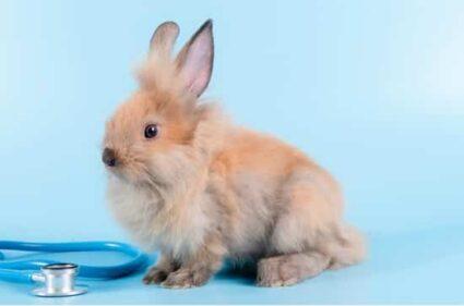 pet rabbit health problems