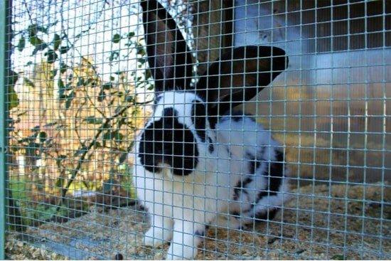 rabbit hutch stinks