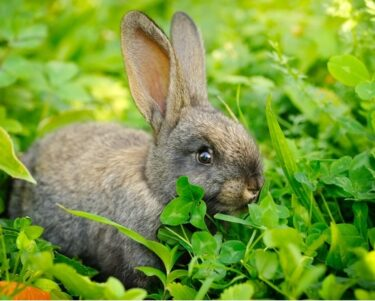what foods are rabbits not allowed to eat?