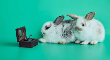 what type of music do rabbits like to listen to?
