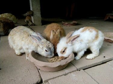 Are Rabbits And Rodents Related?