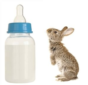 Can Baby Rabbits Drink Cow Milk?