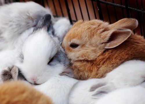 Rabbit Making Noise When Breathing