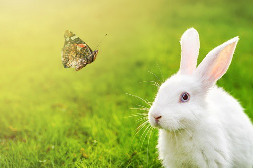 What Insects Do Rabbits Eat?