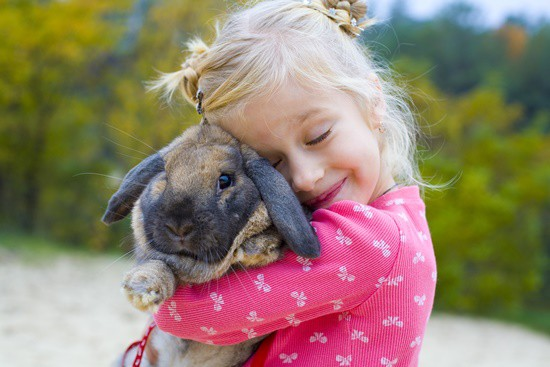 are rabbits affectionate?