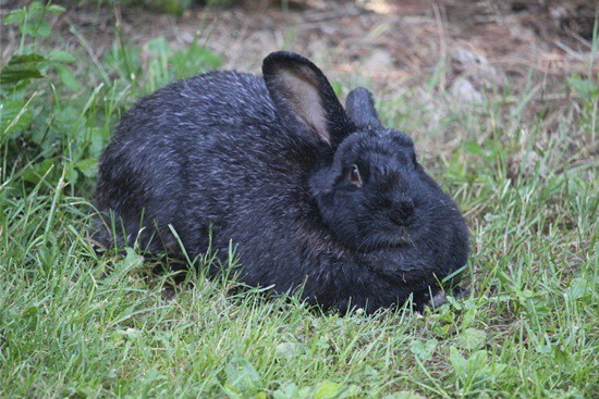 are rabbits allowed to eat bugs?