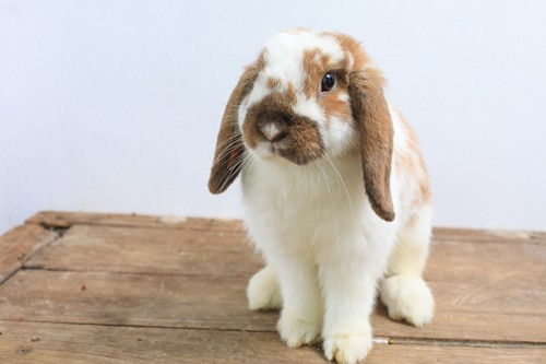 can rabbits live alone happily?
