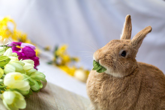 do rabbits eat spinach in the garden?