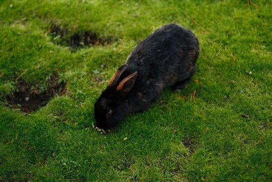 do rabbits throw up?