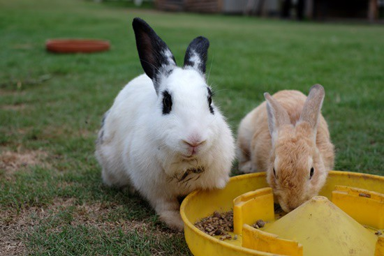 foods that cause constipation in rabbits