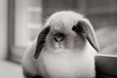 function of rabbit whiskers