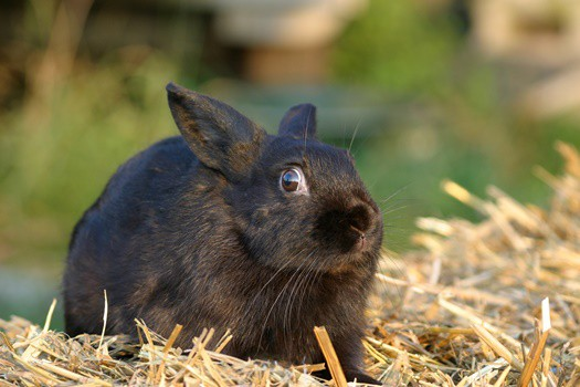 how to reduce stress in rabbits