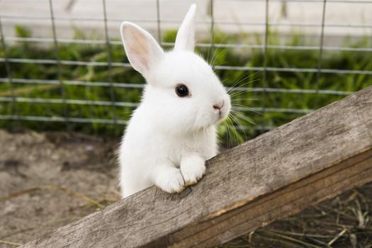 lonely rabbit behavior