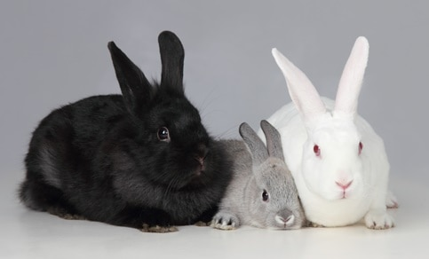 pre bonding rabbits