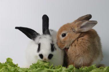 rabbit bonding good signs