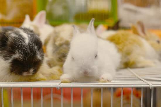 rabbit cage enrichment