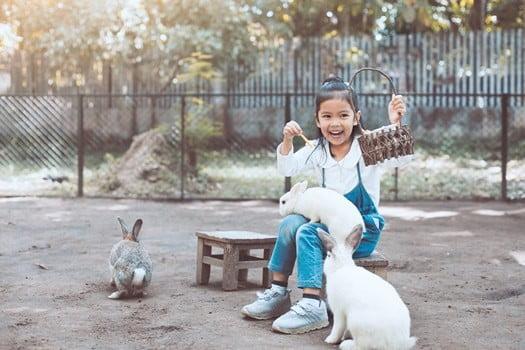 rabbit enrichment ideas