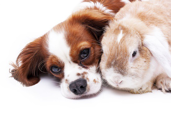 rabbit sense of smell vs dog