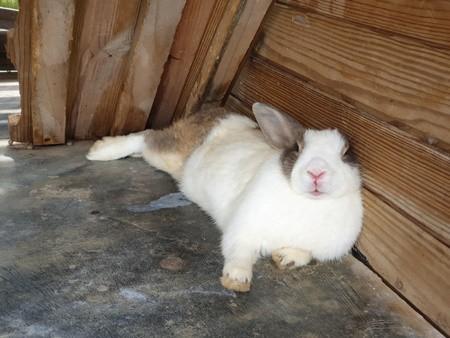 rabbit trembling