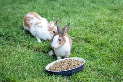 rabbit won't eat pellets anymore