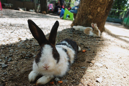 rabbit won't move