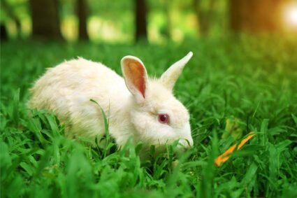 reducing stress in rabbits