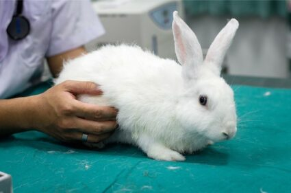 what causes gastrointestinal Stasis in rabbits?