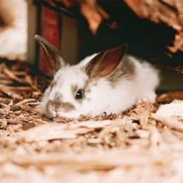 what to feed baby rabbits without a mother